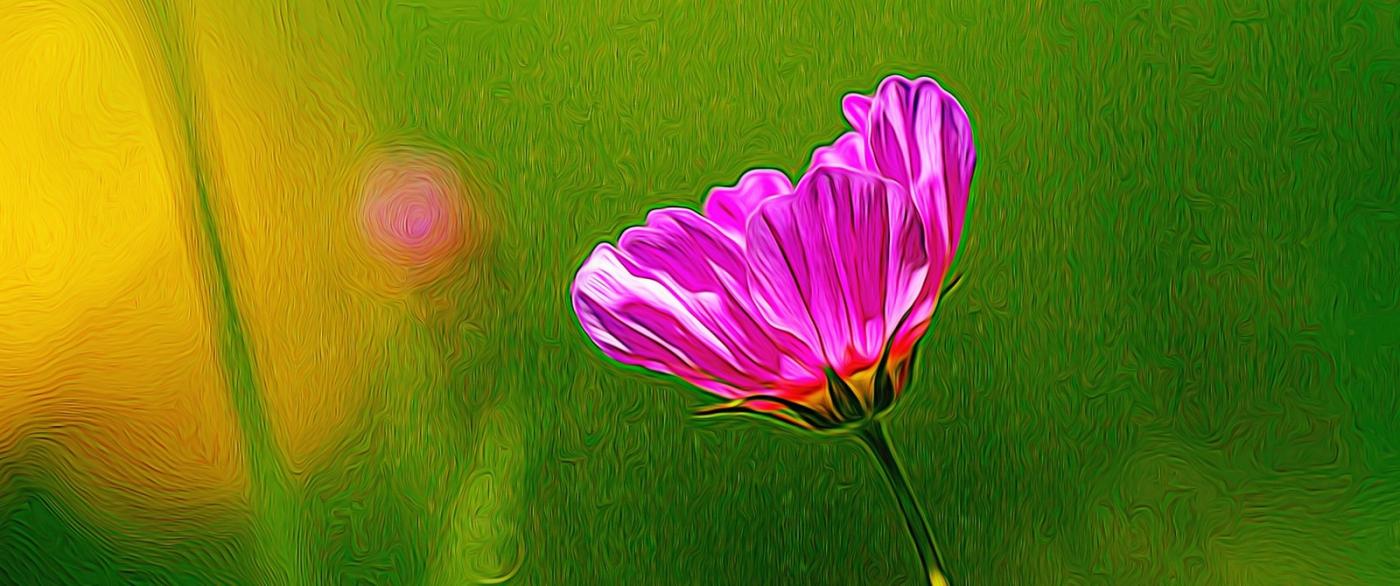 漂亮的罂粟花_图1-4