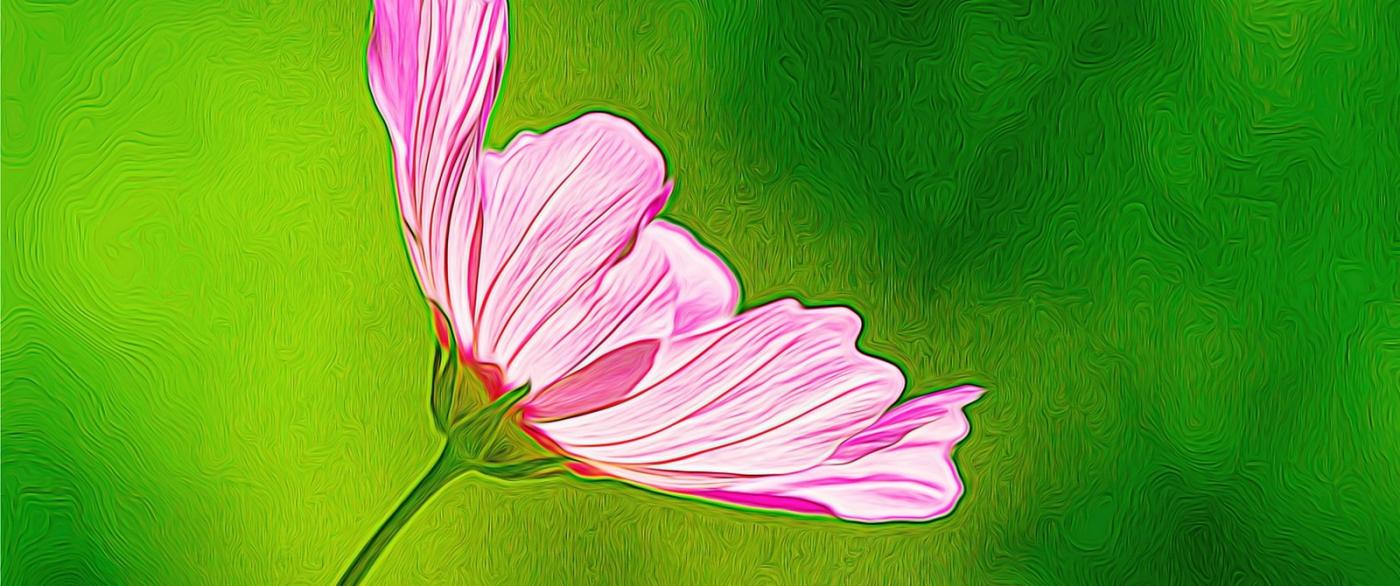 漂亮的罂粟花_图1-3