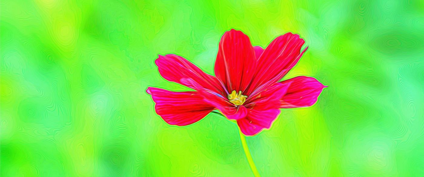 漂亮的罂粟花_图1-7