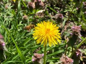 [田螺随拍]跑步随拍小蜂蜜