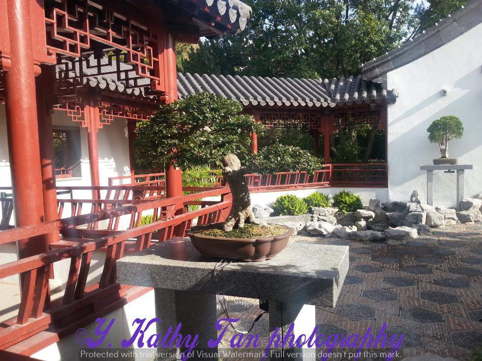 滿地可植物公園 part 1_圖1-19