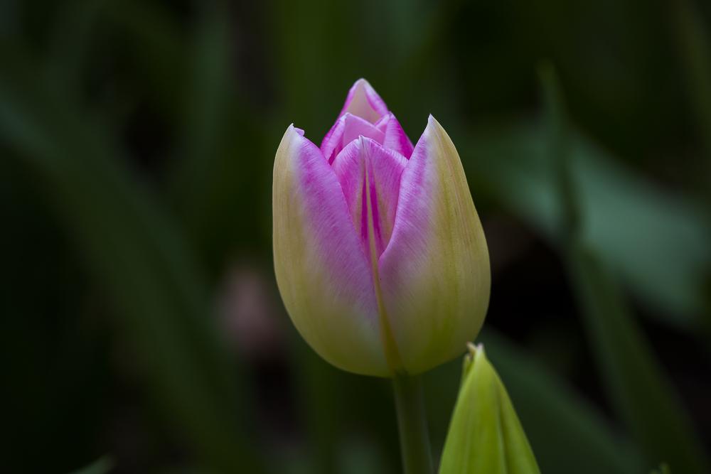 春暖花開_圖1-3