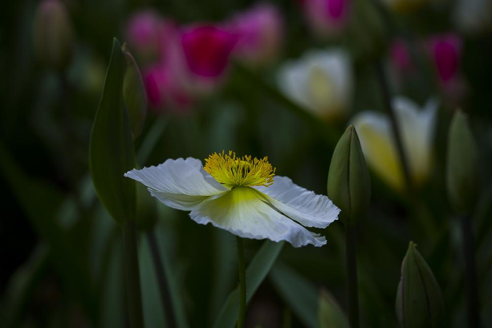 春暖花開_圖1-5