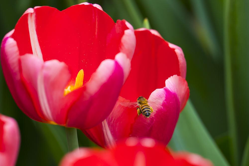 春暖花開_圖1-9