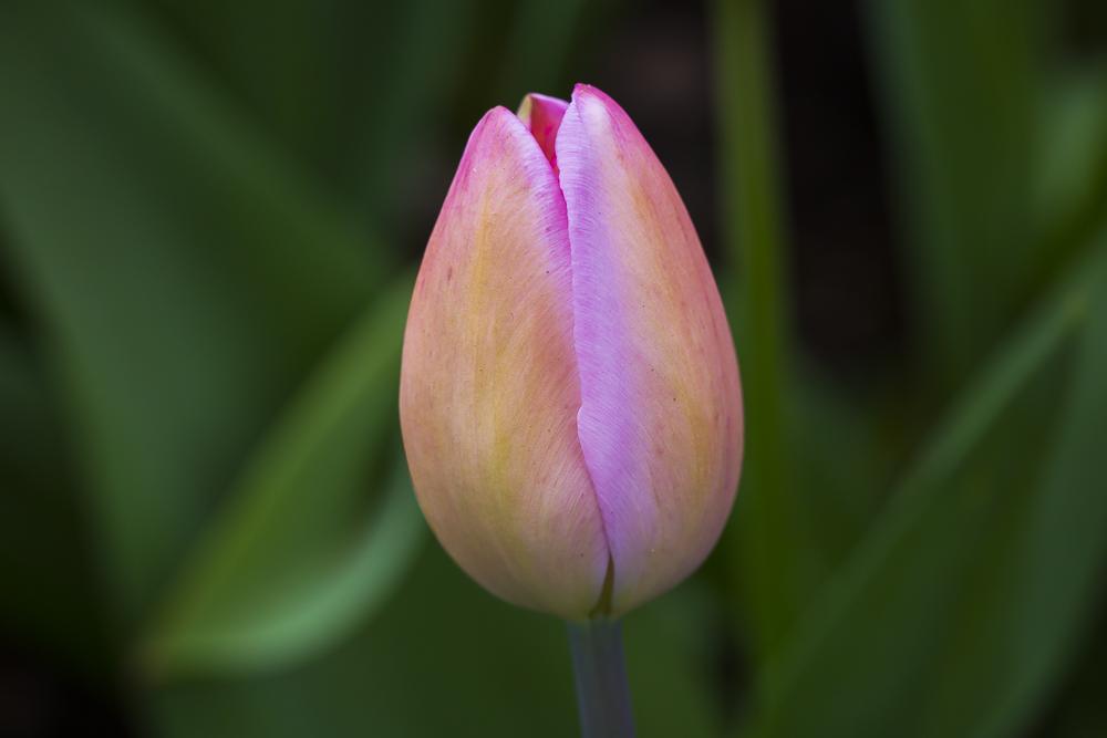 春暖花開_圖1-14