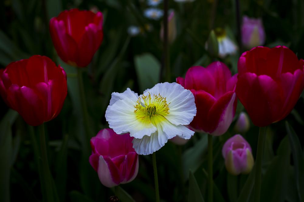 春暖花開_圖1-6