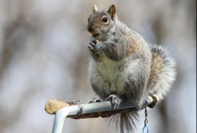 【田螺摄影】我的鸟粮都被松鼠