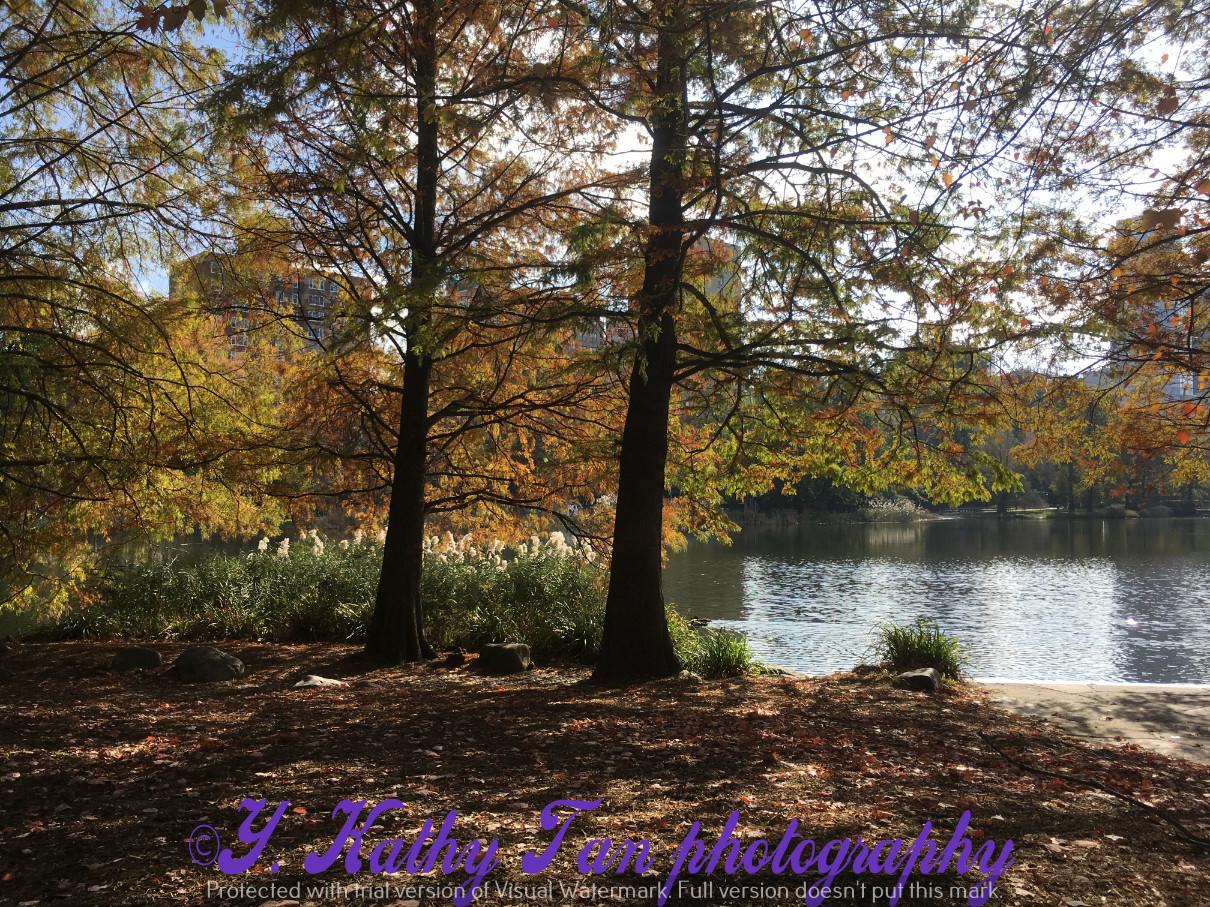 神奇的中央公園秋季_圖1-3