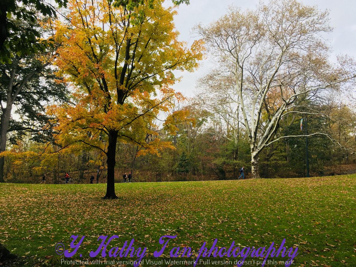 神奇的中央公園秋季_圖1-12
