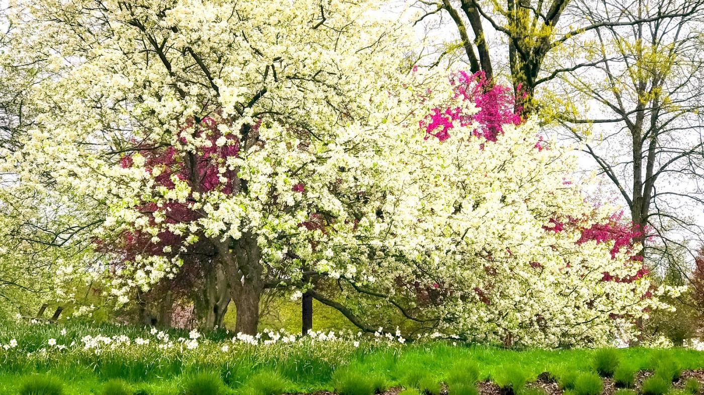 踏春歸來, 處處春色_圖1-7