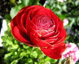 百花争春----花无茛