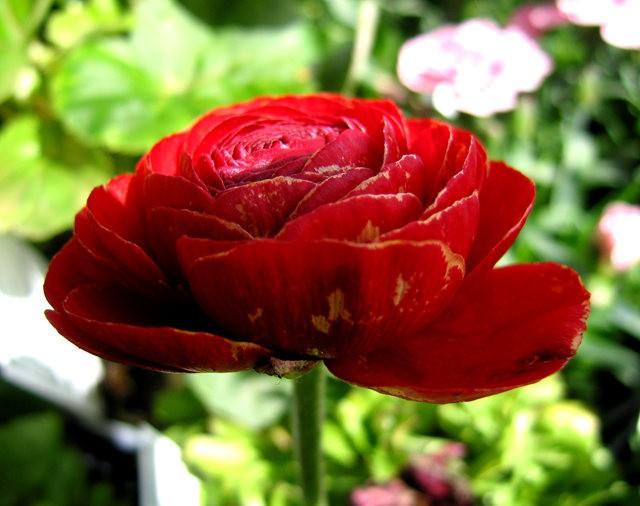 百花爭春----花無茛_圖1-2