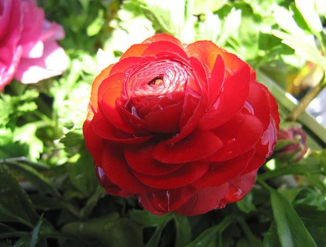 百花爭春----花無茛_圖1-3
