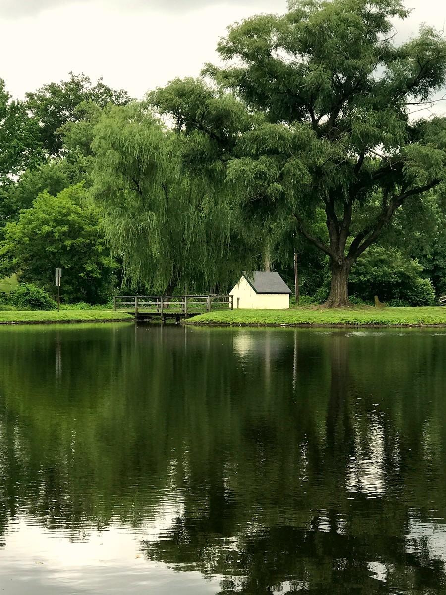 湖邊的景,樹邊的情_圖1-12
