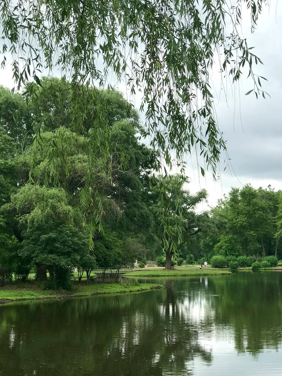 湖邊的景,樹邊的情_圖1-8