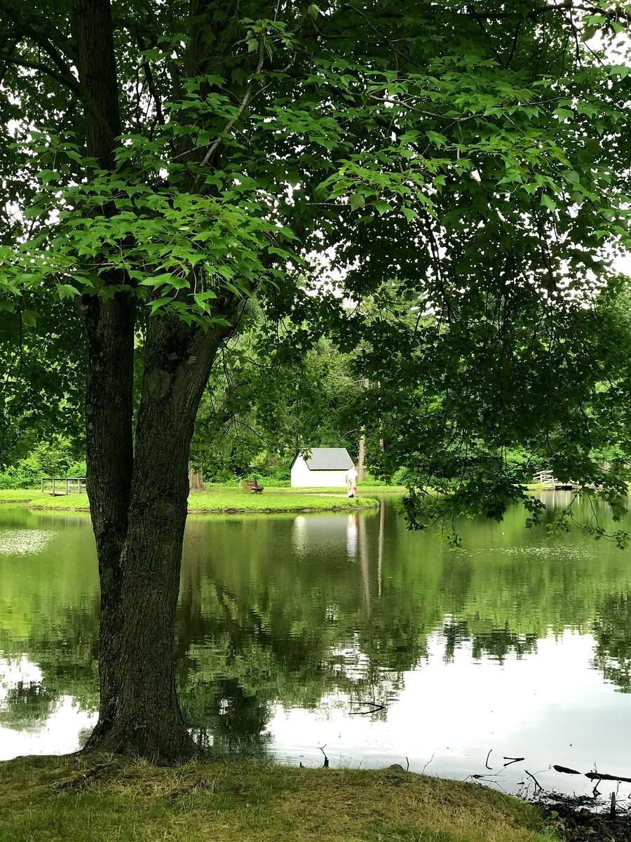 湖邊的景,樹邊的情_圖1-11