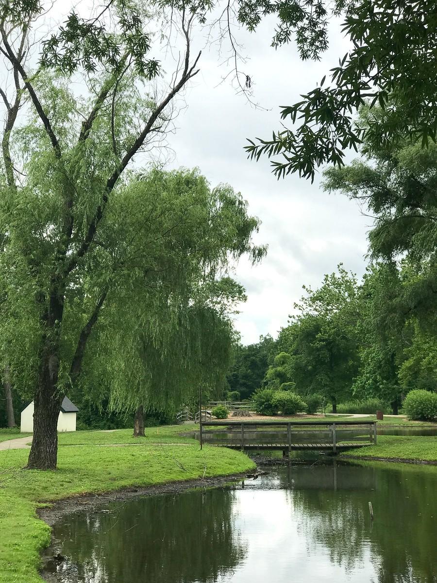 湖邊的景,樹邊的情_圖1-10