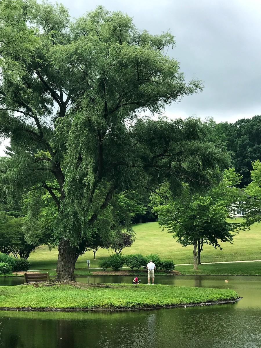湖邊的景,樹邊的情_圖1-6