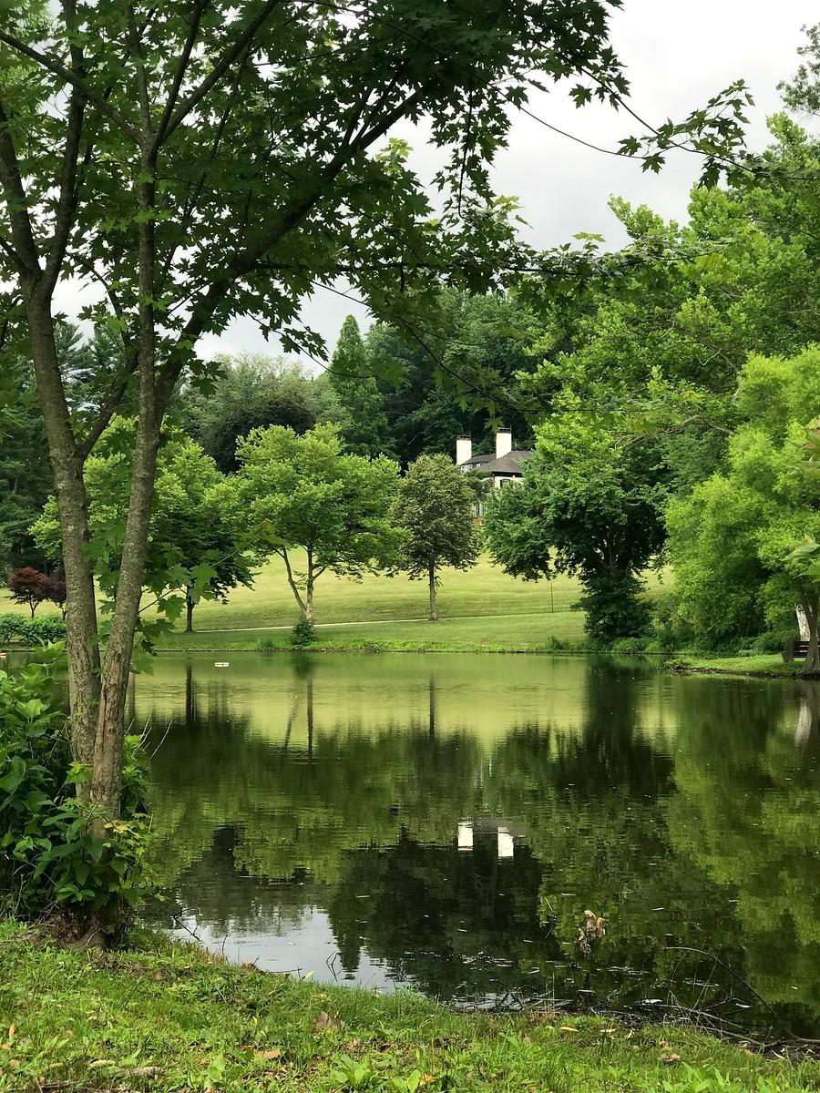 湖邊的景,樹邊的情_圖1-7