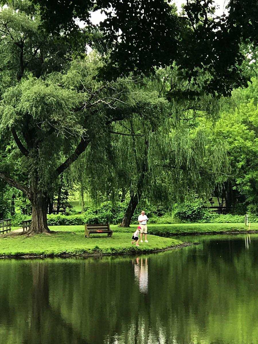 湖邊的景,樹邊的情_圖1-1
