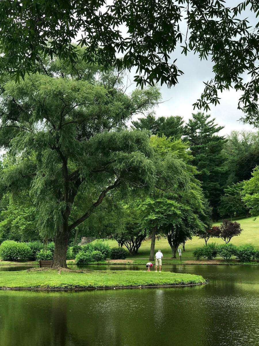 湖邊的景,樹邊的情_圖1-3