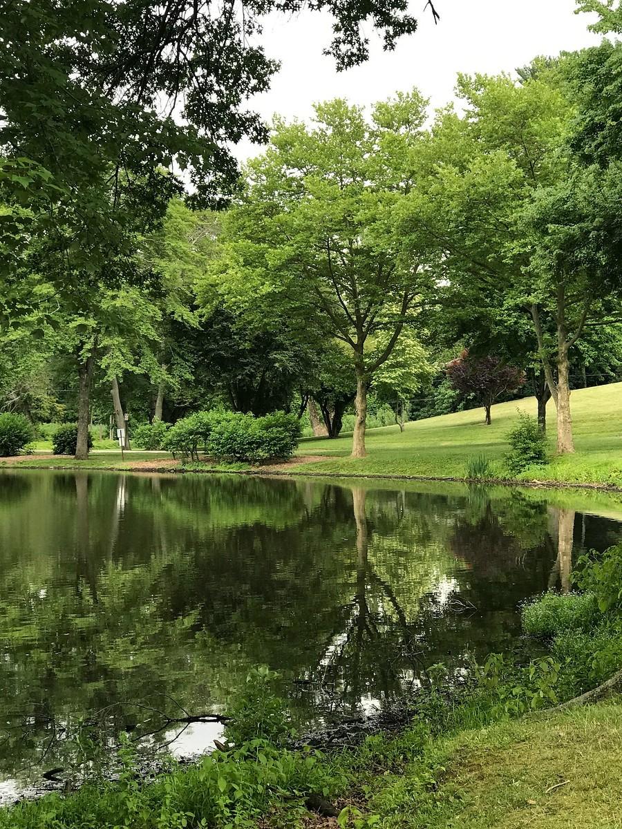 湖邊的景,樹邊的情_圖1-2