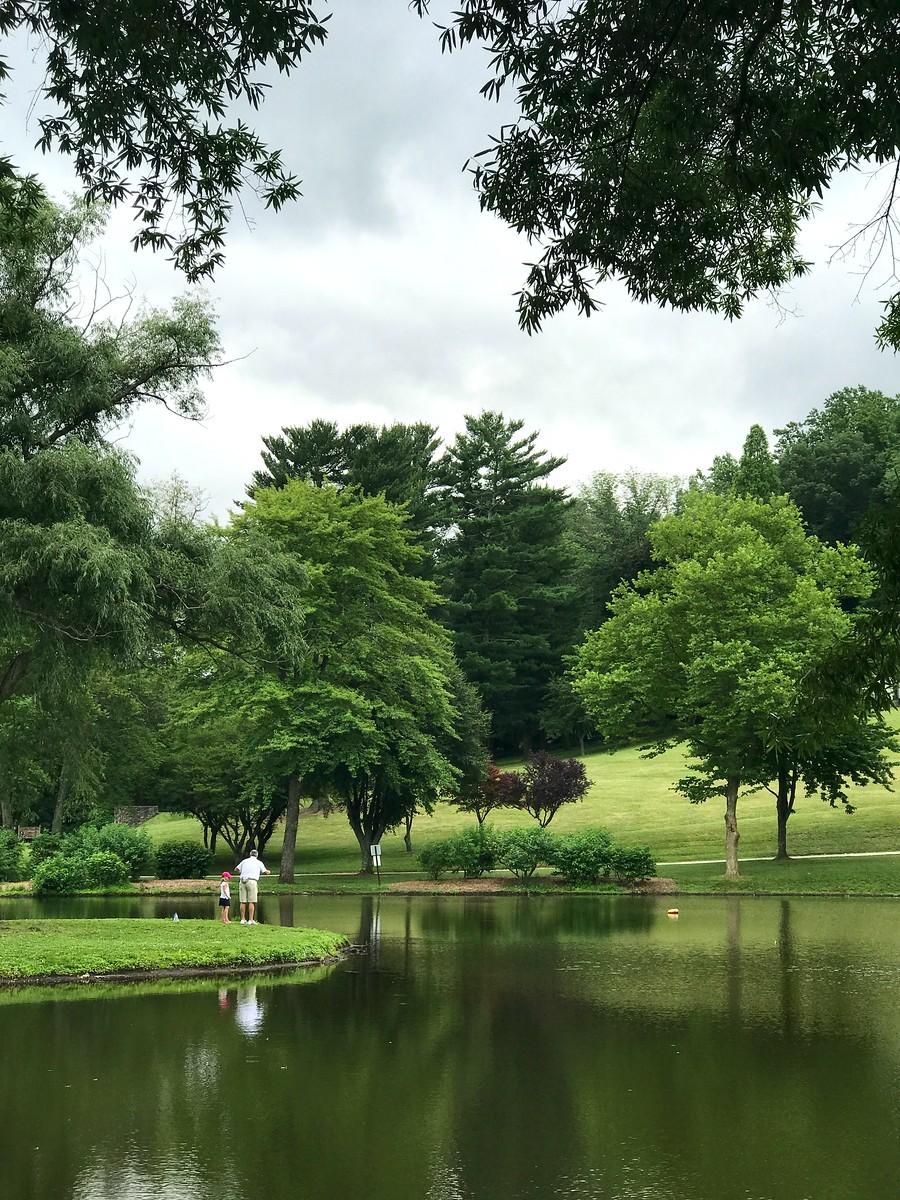 湖邊的景,樹邊的情_圖1-4