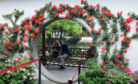 西湖月季花精品展