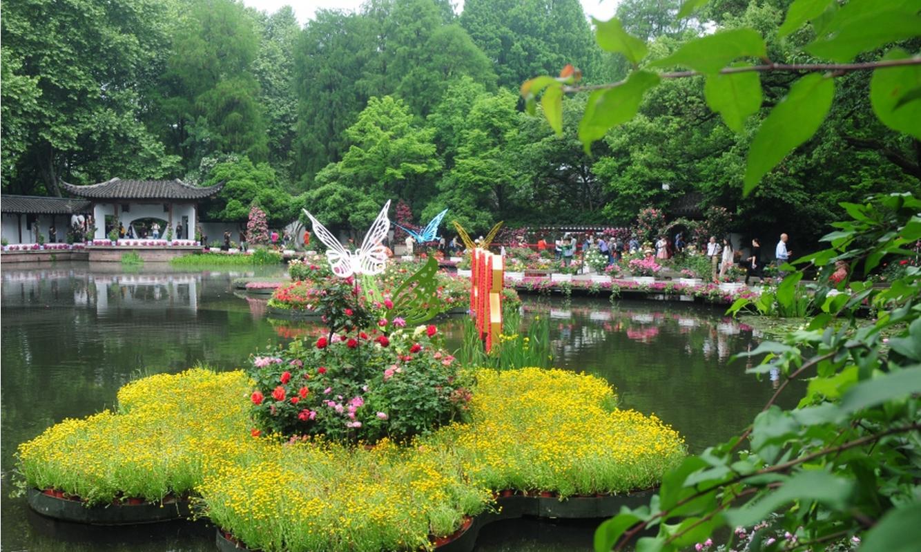西湖月季花精品展_圖1-4