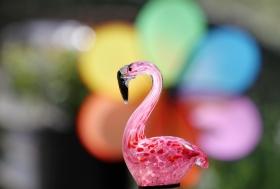 【田螺手机摄影】这个季节我后院最鸟语花香
