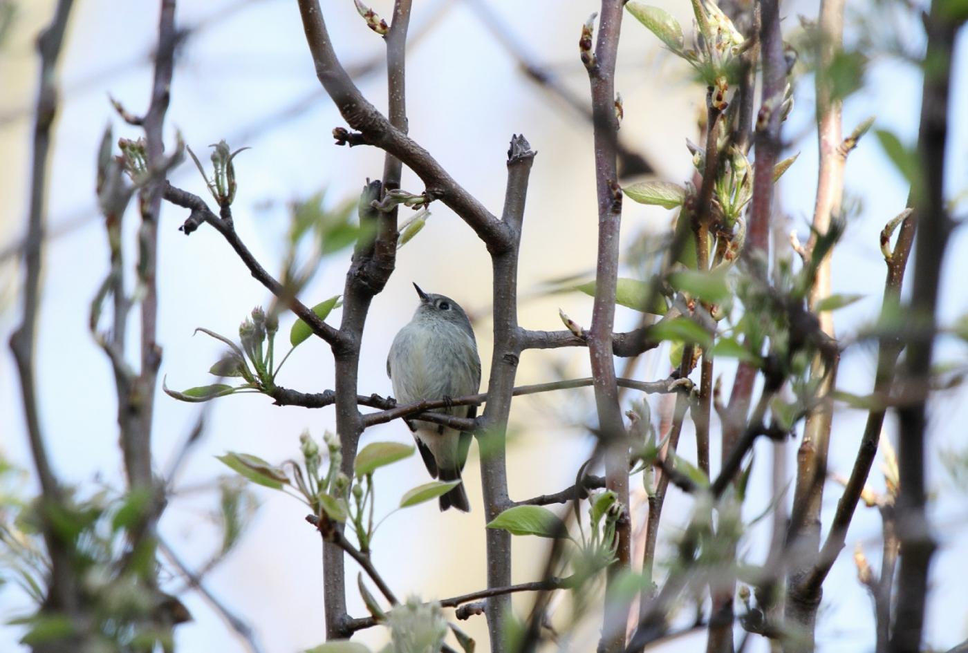 【田螺手机摄影】这个季节我后院最鸟语花香_图1-4