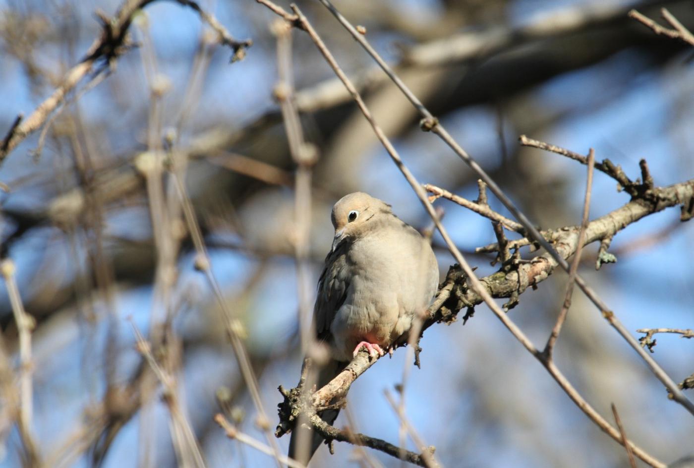 【田螺手机摄影】这个季节我后院最鸟语花香_图1-6