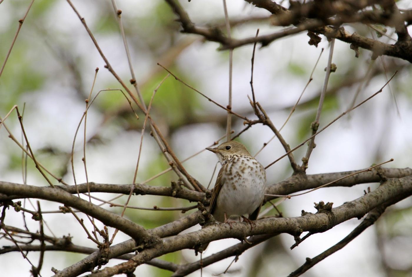 【田螺手机摄影】这个季节我后院最鸟语花香_图1-8