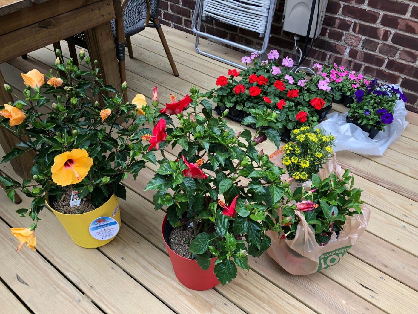【田螺随拍】分享去THE HOME DEPOT红地铺买花的经验_图1-15