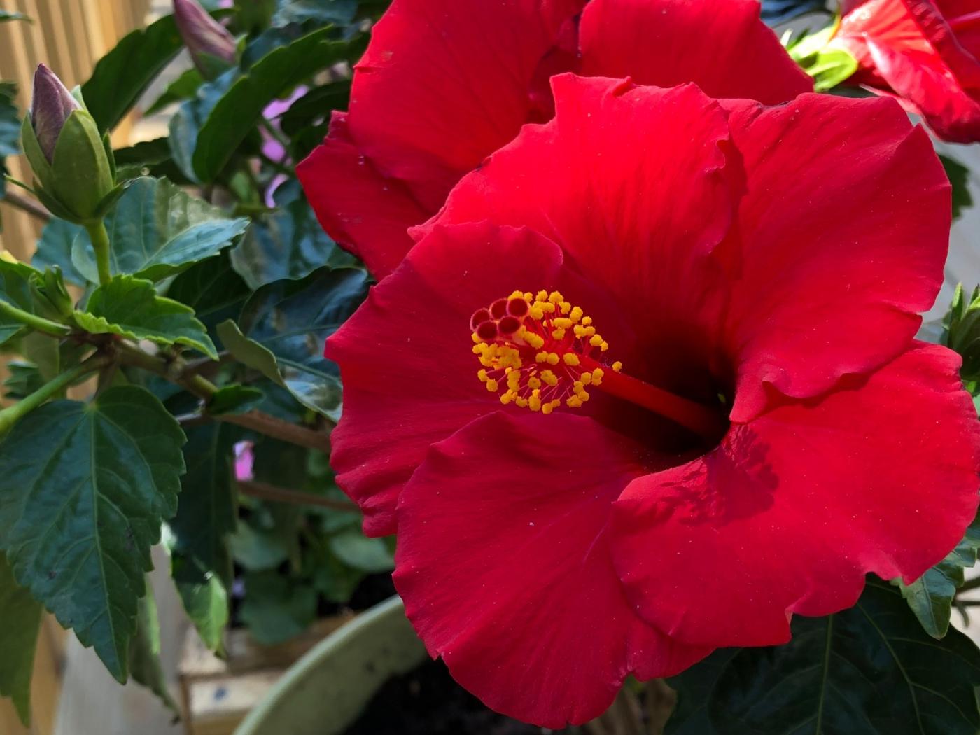 【田螺隨拍】分享去THE HOME DEPOT紅地鋪買花的經驗_圖1-7