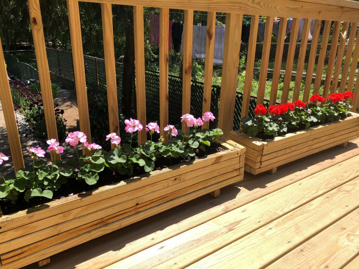 【田螺隨拍】分享去THE HOME DEPOT紅地鋪買花的經驗_圖1-4