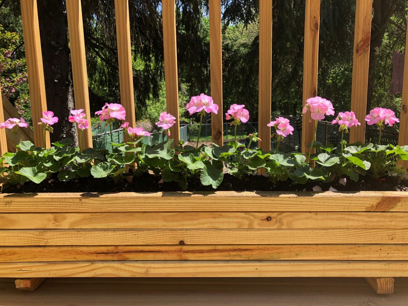 【田螺随拍】分享去THE HOME DEPOT红地铺买花的经验_图1-12