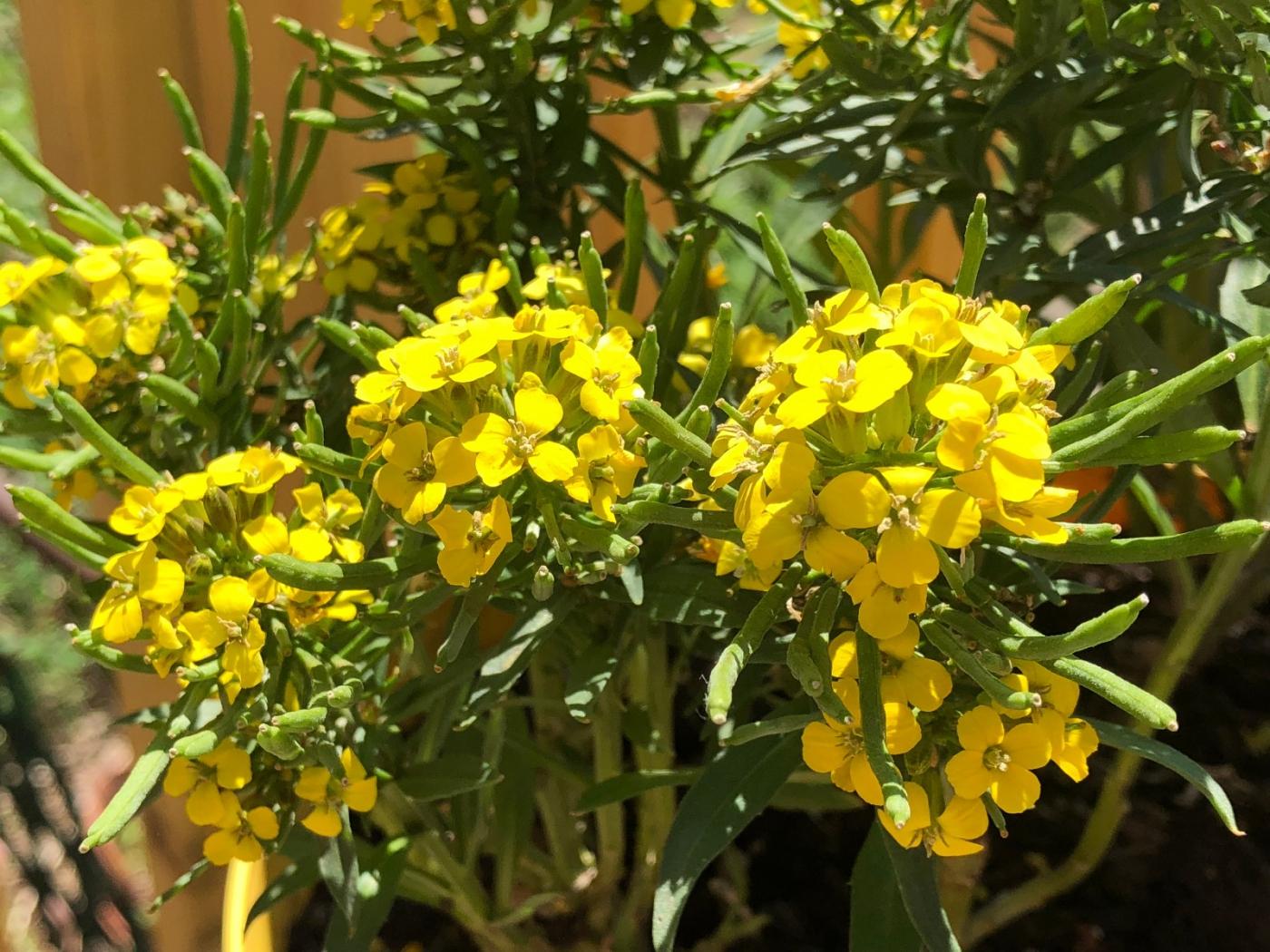 【田螺随拍】分享去THE HOME DEPOT红地铺买花的经验_图1-11
