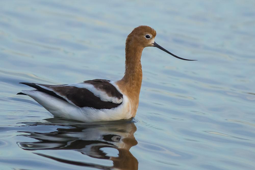湿地拍的几只鹬_图1-16