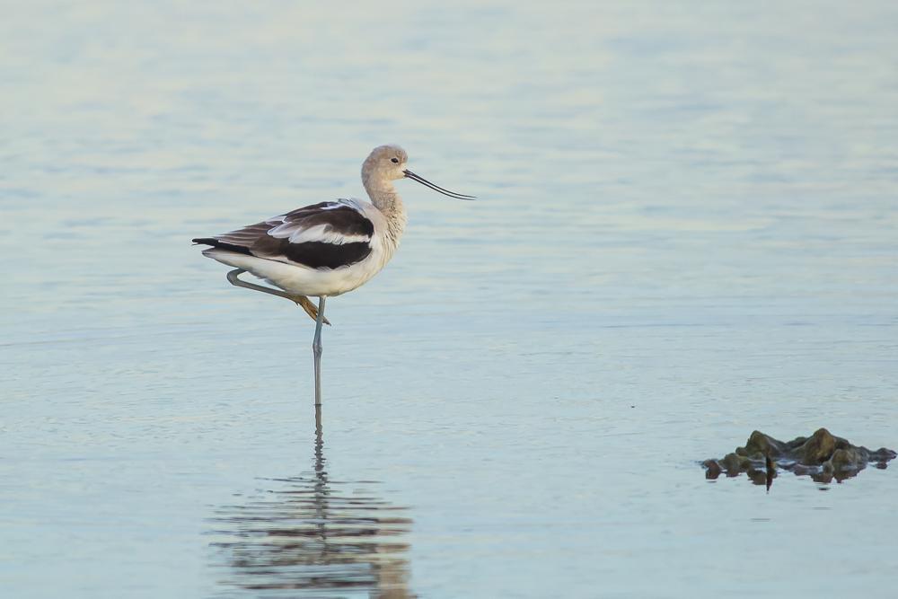 湿地拍的几只鹬_图1-19