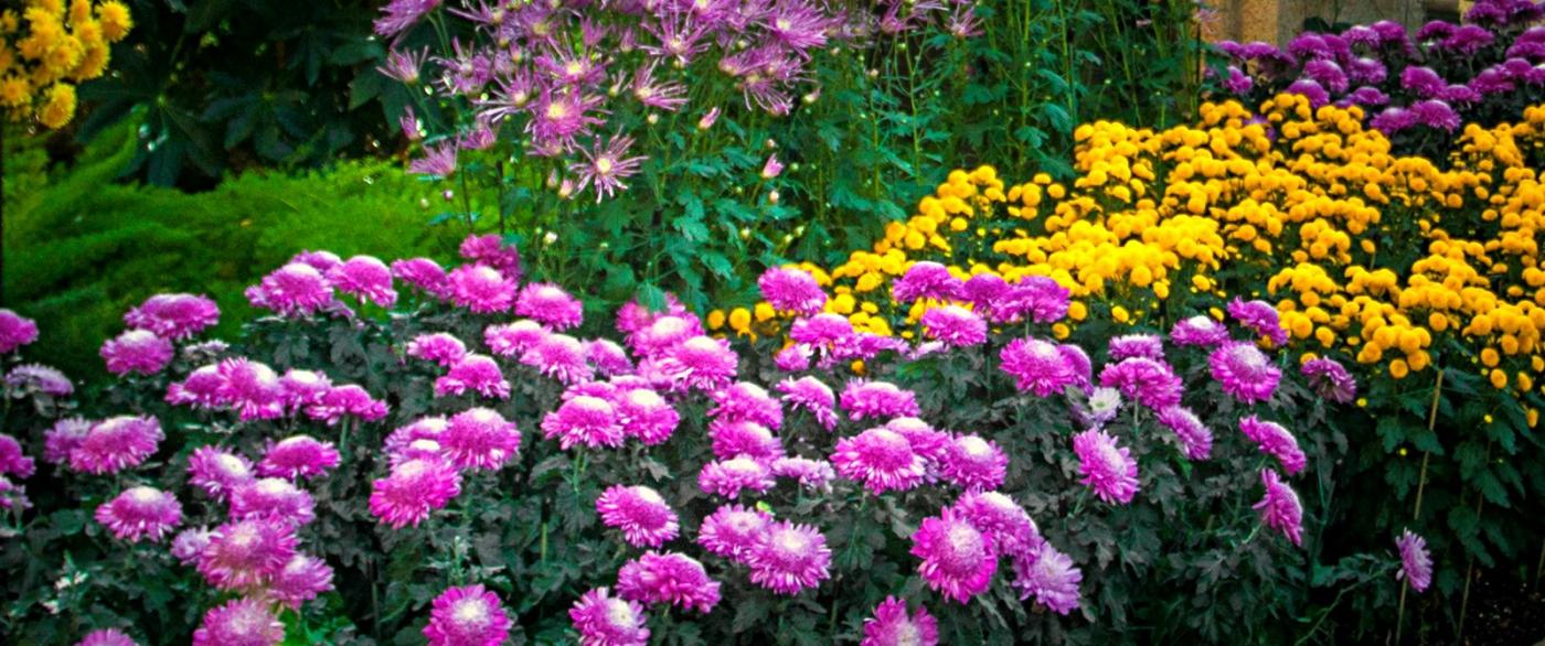 滿目鮮花,五彩繽紛_圖1-9