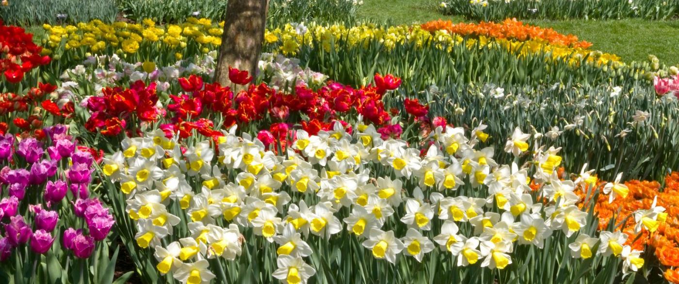 滿目鮮花,五彩繽紛_圖1-5