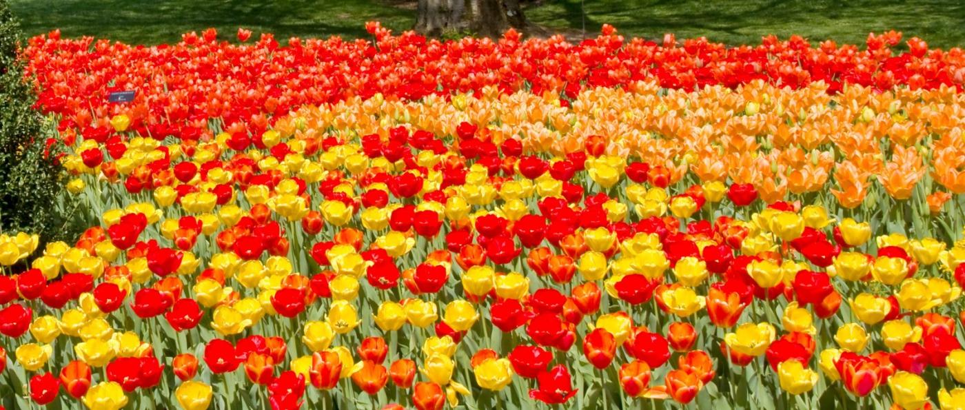 滿目鮮花,五彩繽紛_圖1-1
