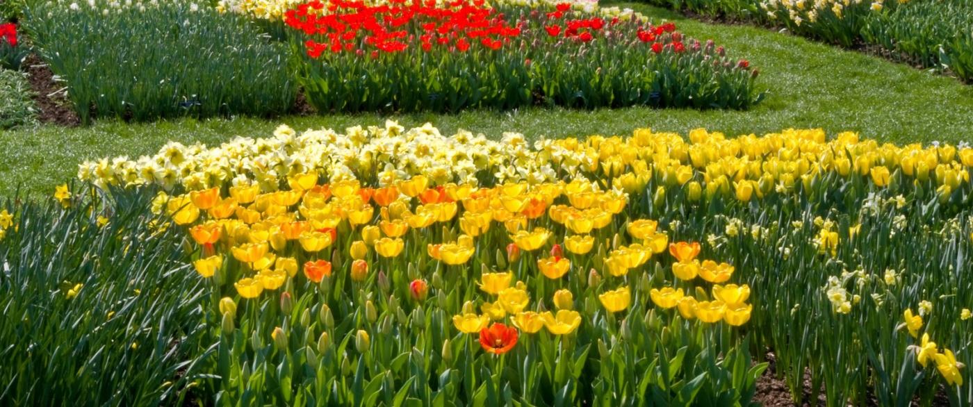滿目鮮花,五彩繽紛_圖1-2