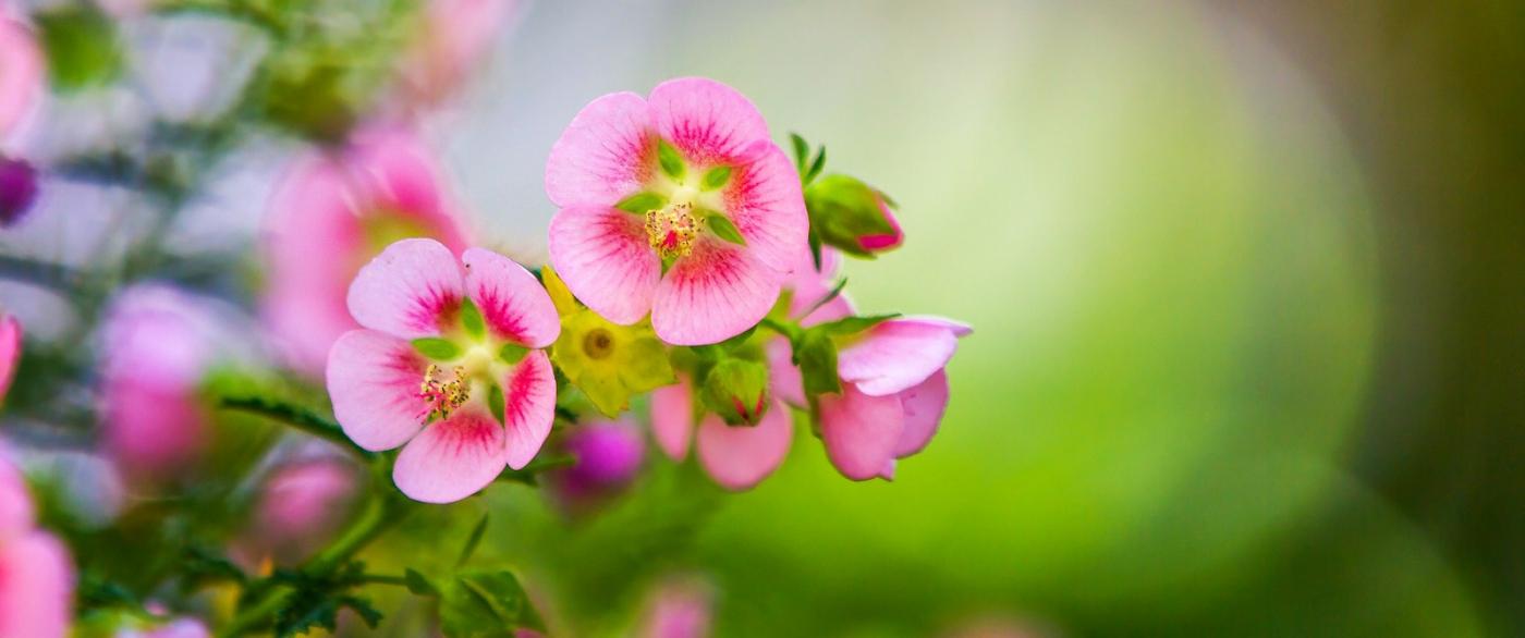 送上鲜花,祝母亲节快乐_图1-5