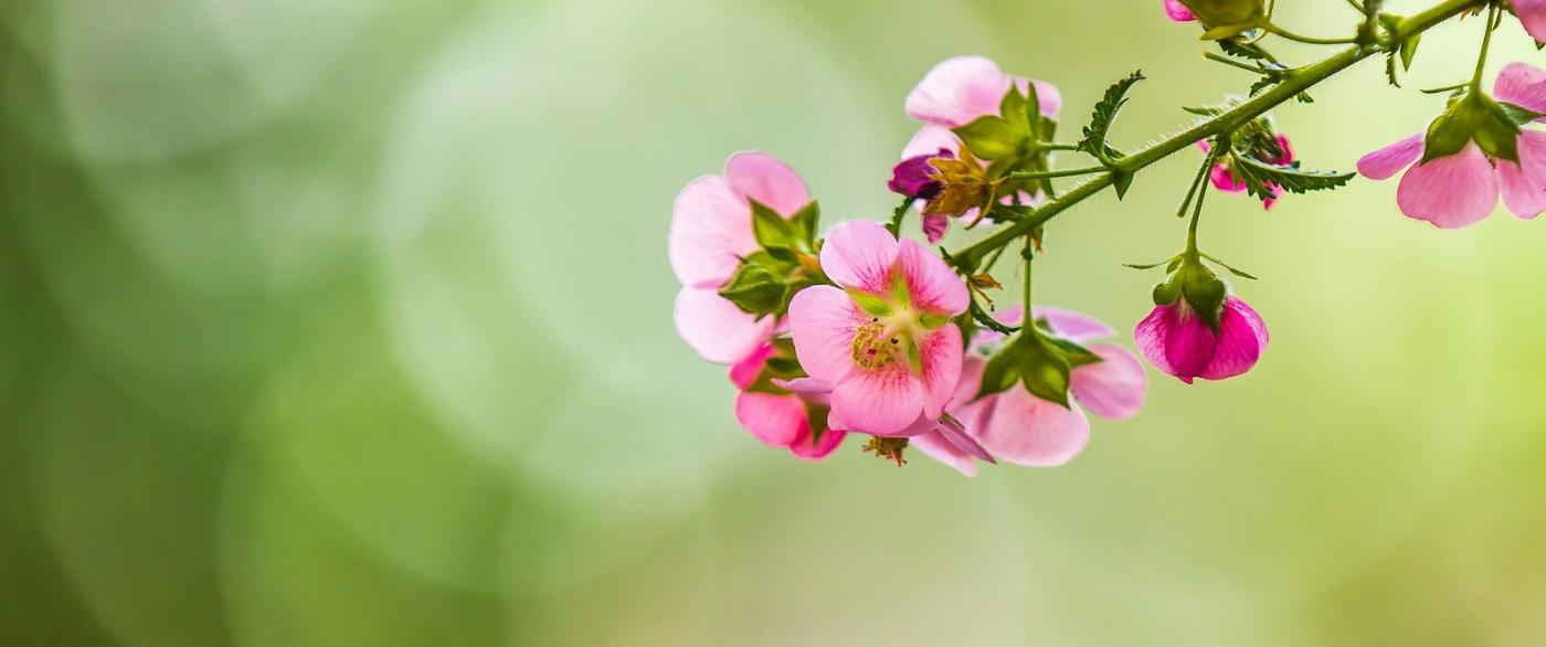 送上鲜花,祝母亲节快乐_图1-7