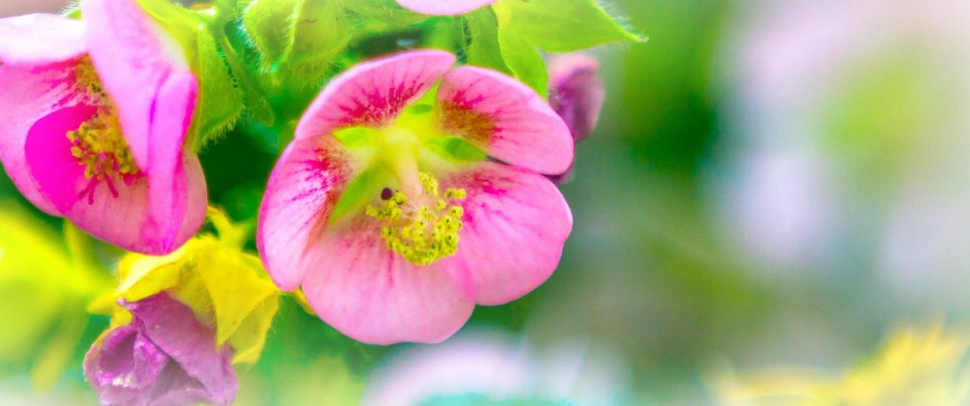送上鲜花,祝母亲节快乐_图1-6