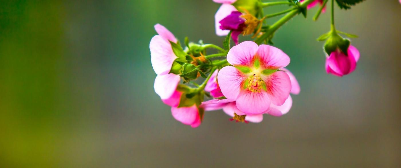 送上鲜花,祝母亲节快乐_图1-8