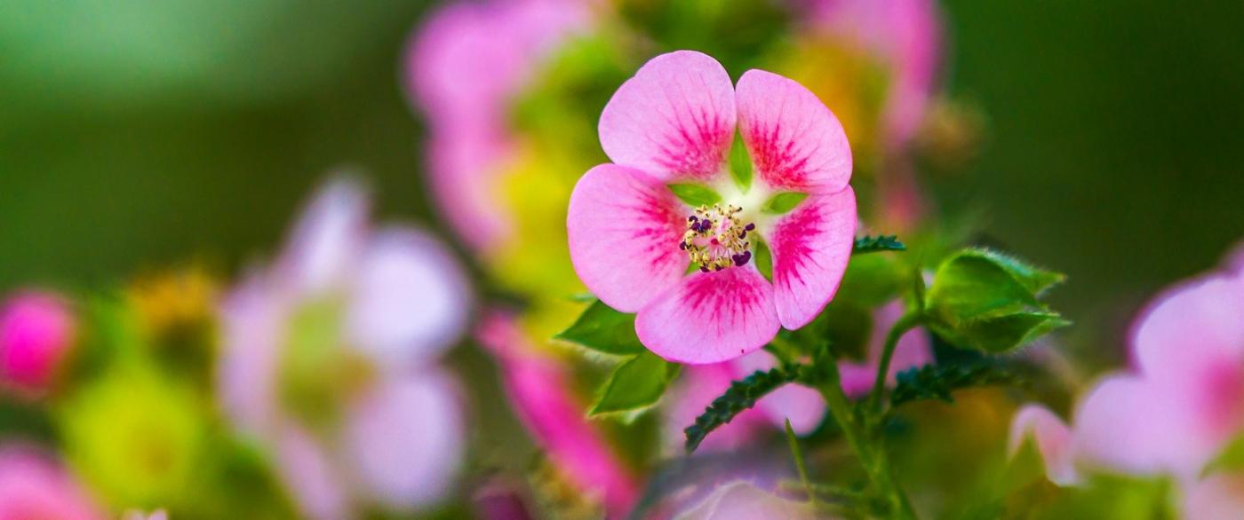 送上鲜花,祝母亲节快乐_图1-2