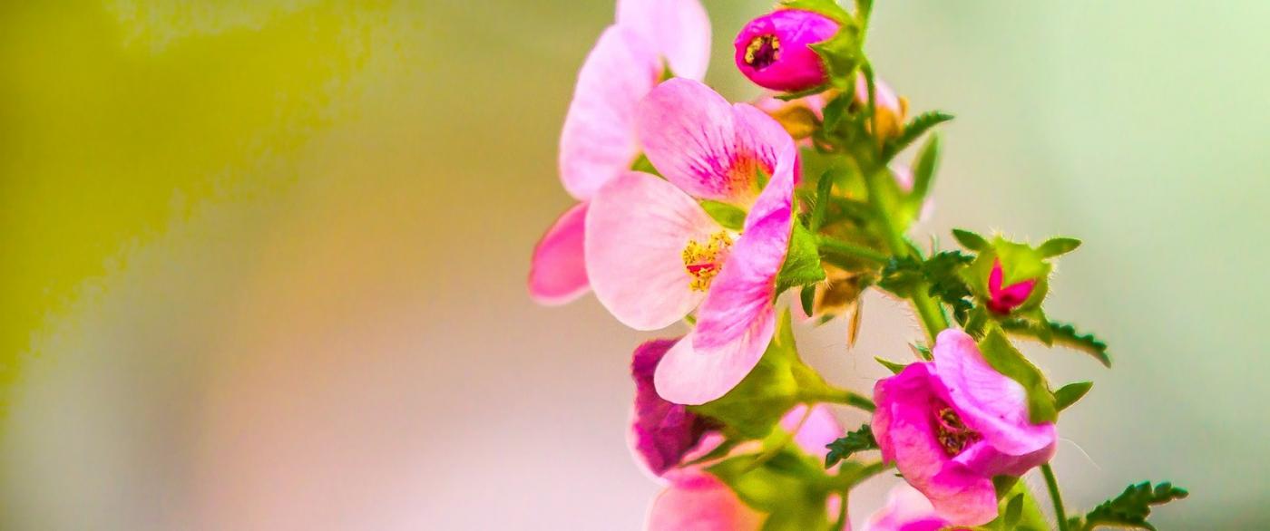 送上鲜花,祝母亲节快乐_图1-3